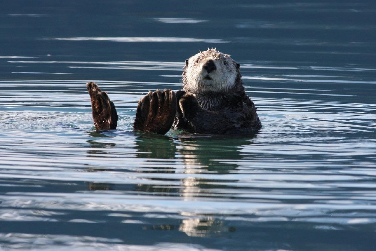 Homer sea otter
