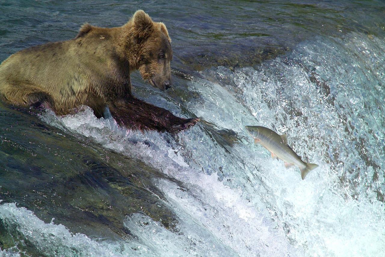 Top 5 Senior Travel Destinations Alaska