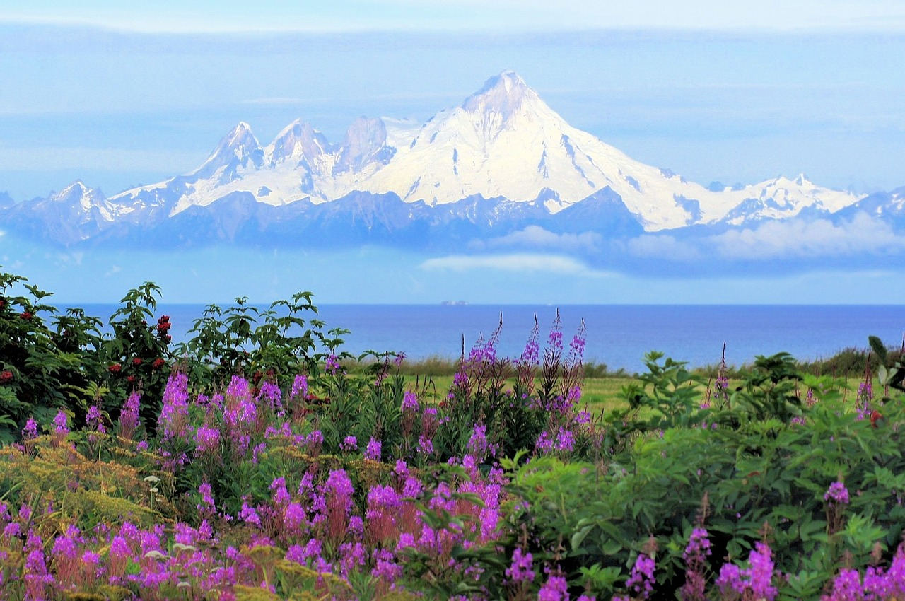 things to do in homer flowers mountains