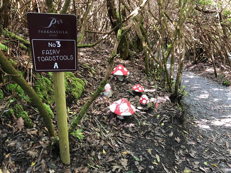 Parknasilla fairy toadstools