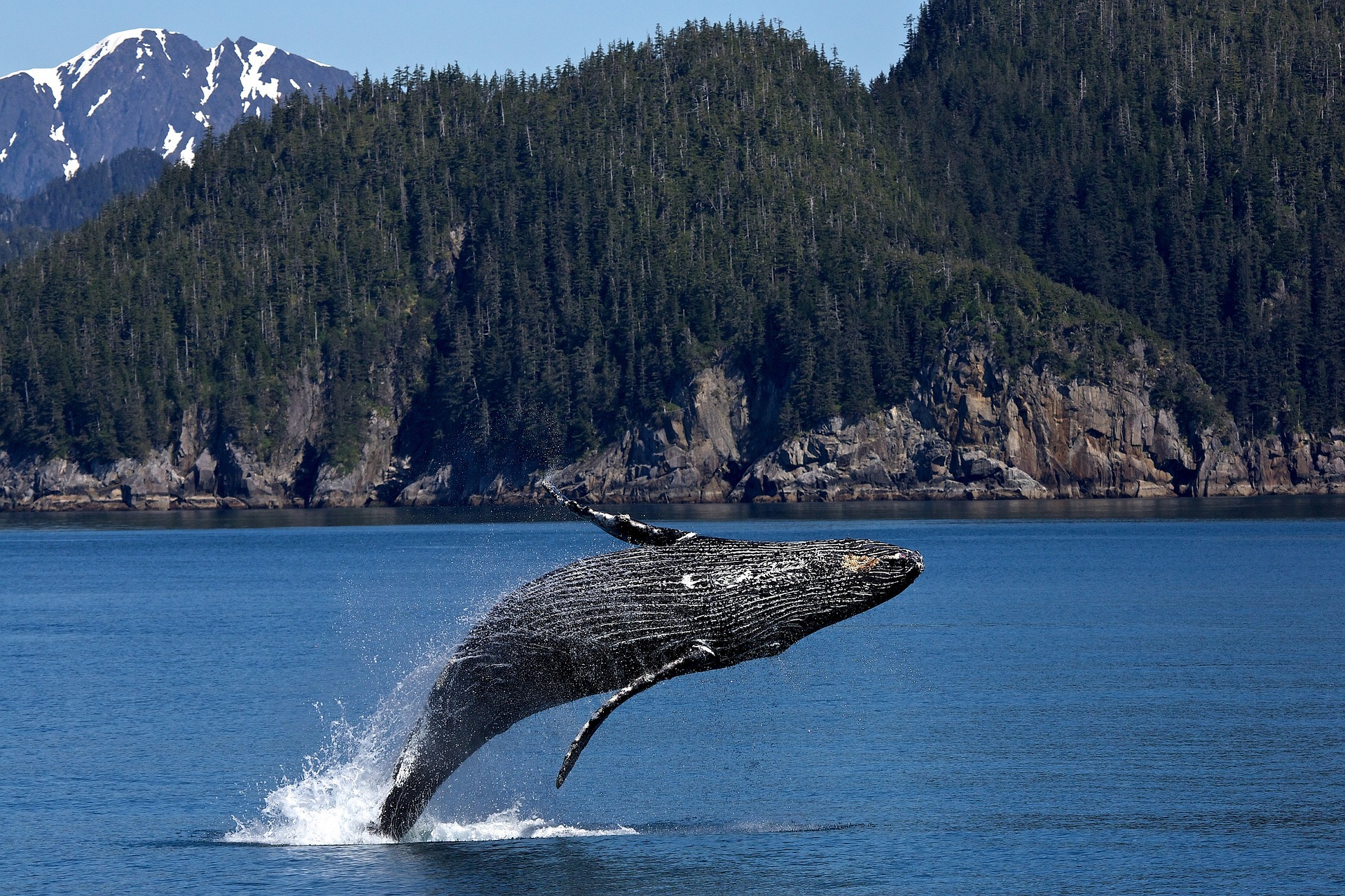 Traveling to Alaska whale