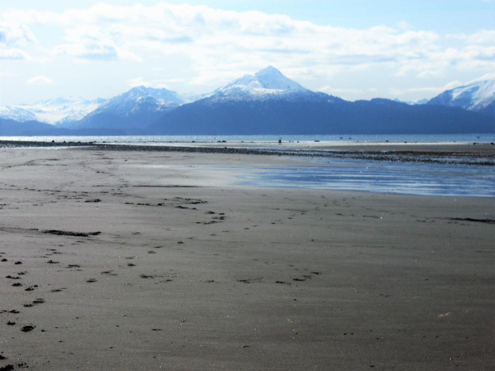 Bishop's Beach Homer Alaska at low tide
