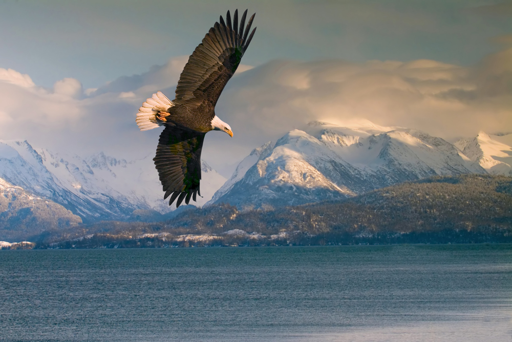 looking at majestic bald eagles is one of the things to do in Homer