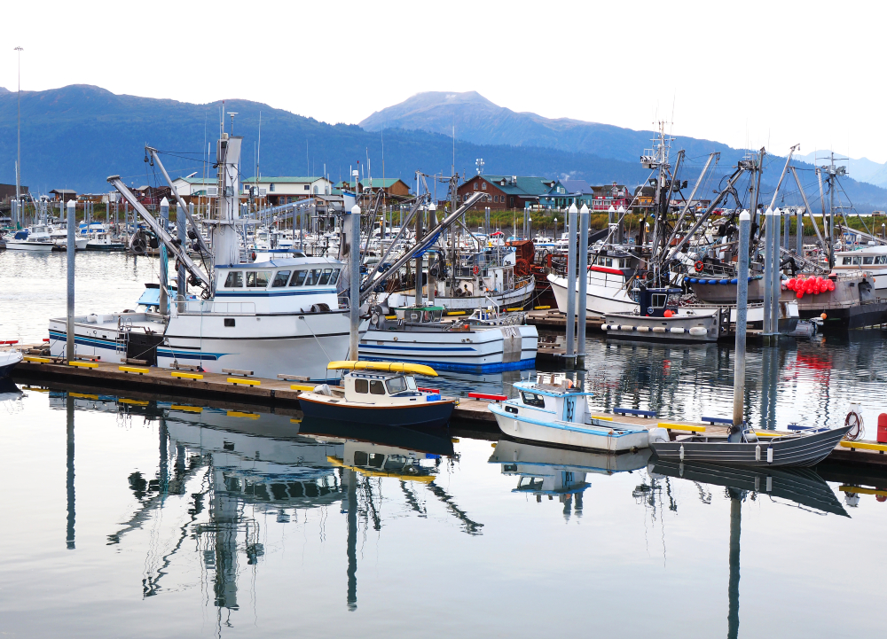 Visiting the Homer Marina is a fun thing to do when visiting Homer