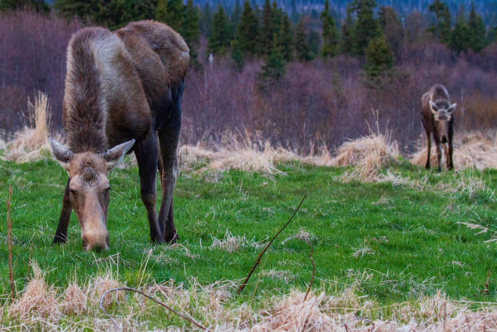 Things to do in Homer include keeping an eye out for wildlife