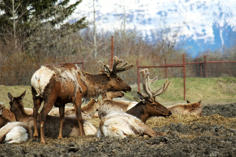 Anchorage to Seward Wildlife Conservation Center