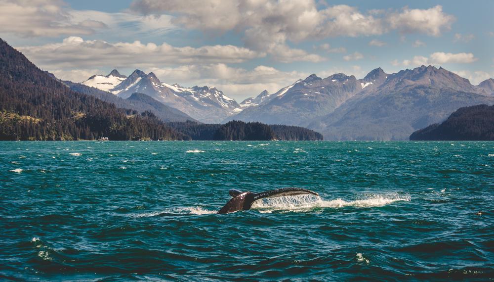 towns in Alaska Homer whale