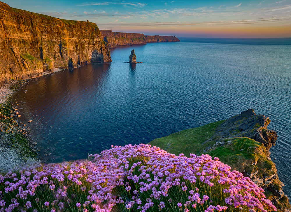 Cliffs of Moher Ireland with flowers