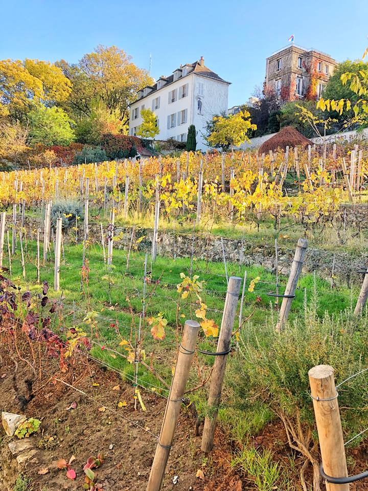 Unusual things to do in Paris vineyard
