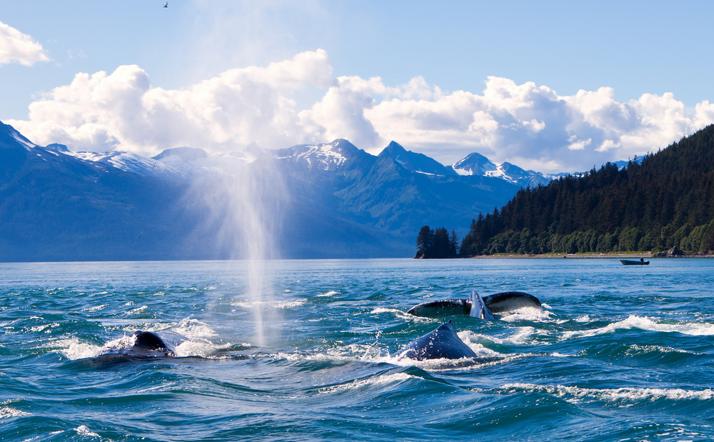 Seeing whales in Alaska is epic
