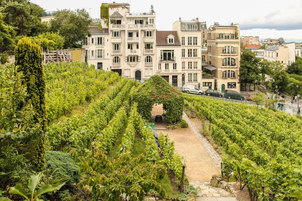 5 days in Paris Montmartre vineyard