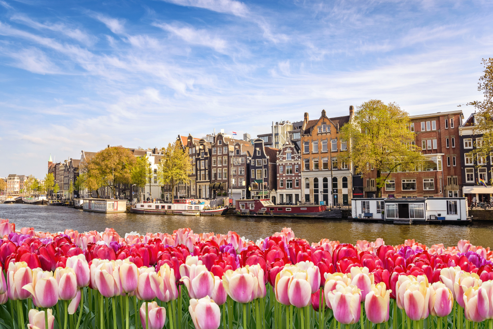 Tulips are everywhere in Amsterdam in the Springtime