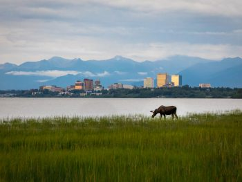 Looking for wildlife is one of the great things to do in Anchorage