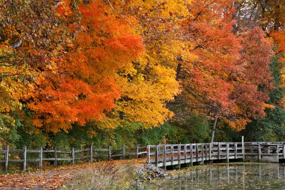 Ohio's brilliant trees in autumn make the state one of the best places to see fall foliage in Ohio
