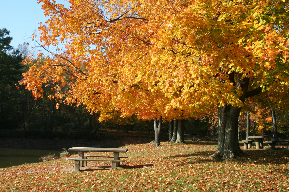 A park in Columbus Ohio that has brilliant ohio fall foliage