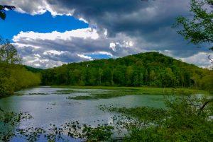 beautiful lake surrounded by greenery
