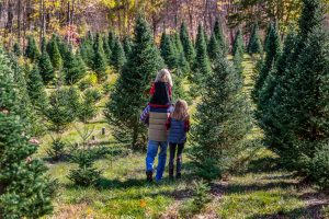 family walking through Christmas tree farms in Ohio together