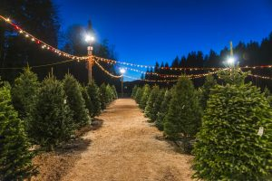Christmas tree farms in Ohio at night with twinkle lights