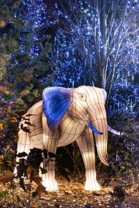 white and blue lit up elephant at the Cincinnati Zoo Christmas in Ohio