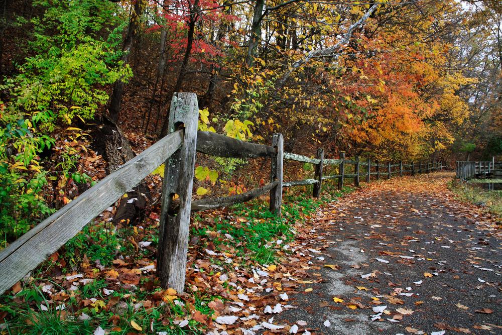 Beautiful path in autumn in Ohio to hike