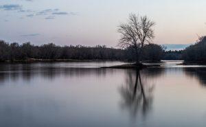 bare tree in waterway