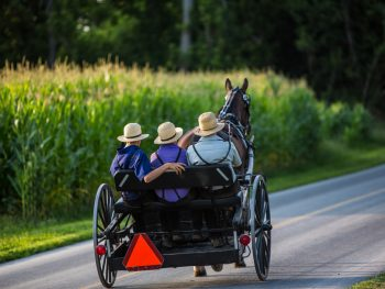 People riding in a horse drawn buggy