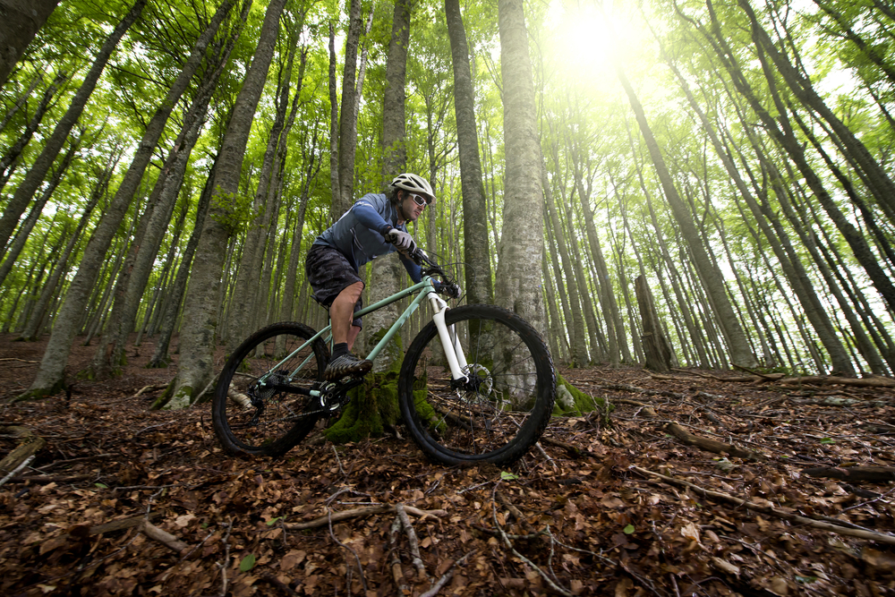 someone mountain biking in the forest
