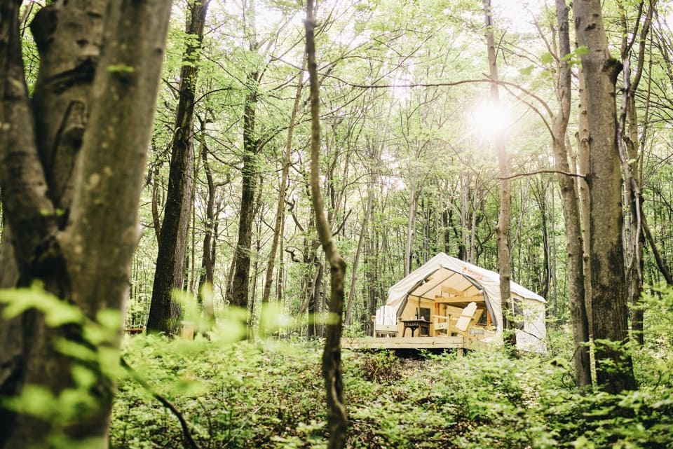 A beige tent in the middle of the woods on a sunny day