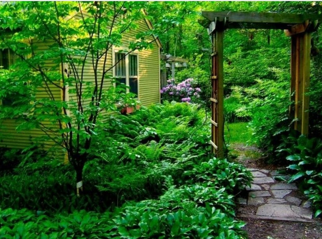 The exterior of a green cottage surrounded by a large lush garden. There are large green ferns, shrubs, and trees. There is a arbor over a stone walkway leading to a back yard and you can see some purple flowers on a bush. One of the best vrbos in Michigan.