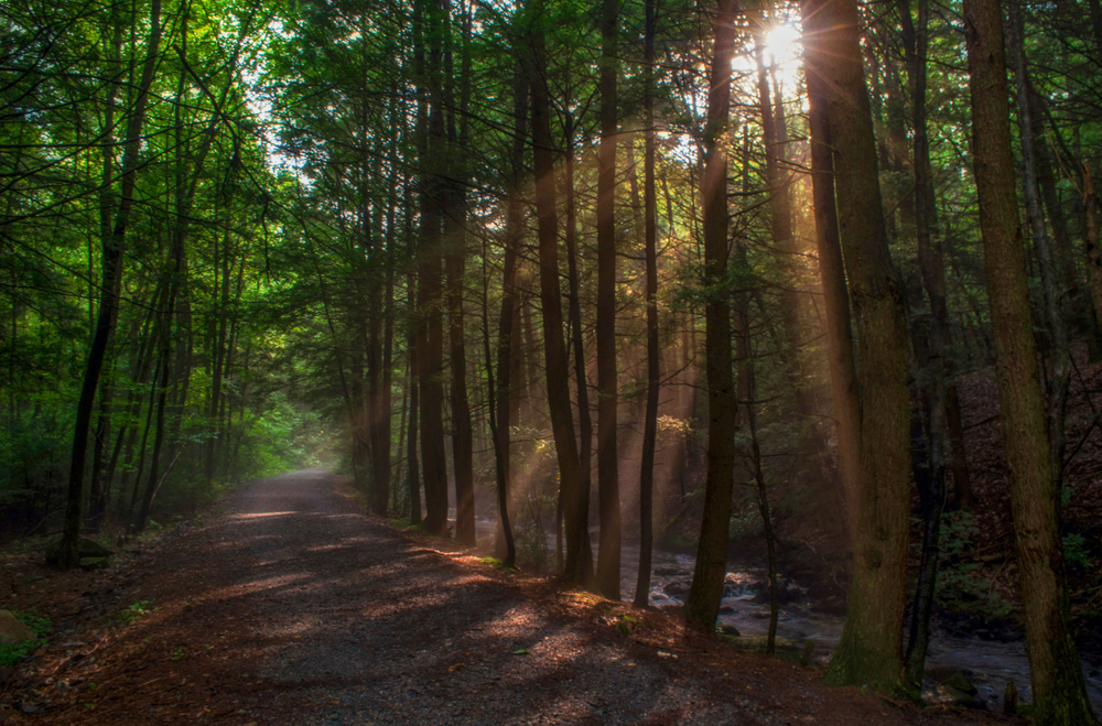 A dense wooded area in the woods of Pennsylvania. There is a dirt path, tall trees, and a small creek running behind some trees on the other side of the trail. There is barely any light coming through the trees.