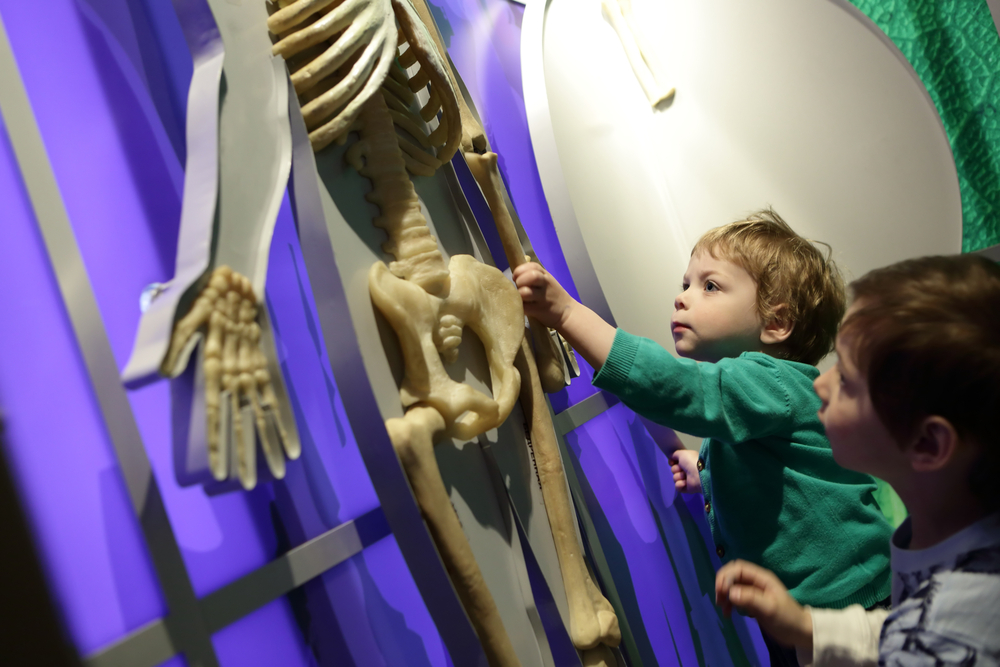 Two kids touching a plastic skeleton display in a museum. There are purple, white, and green textured walls behind the skeleton.